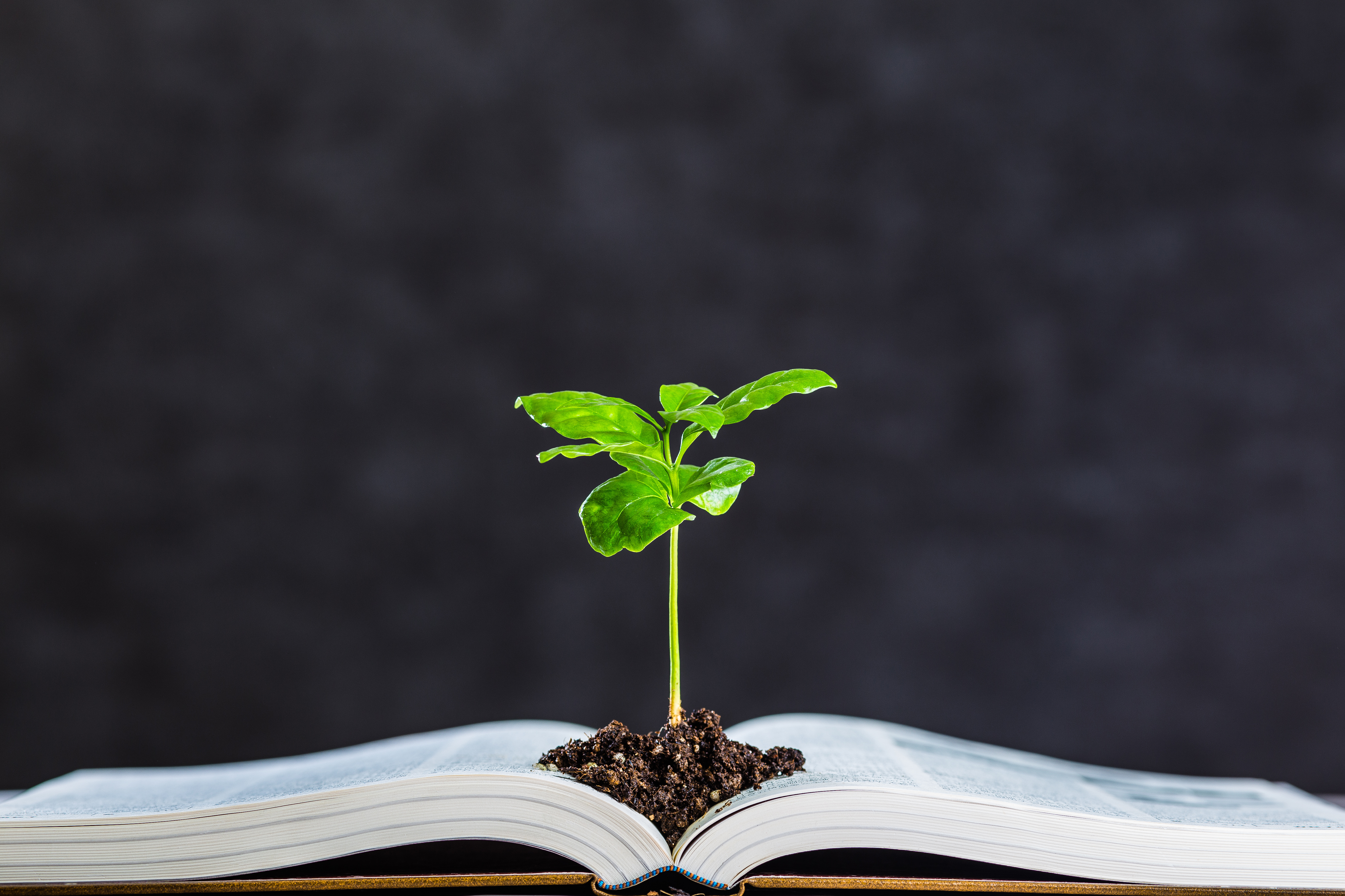 plant growing out of book